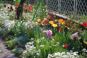 Пролетните лехи - пълни с цвят