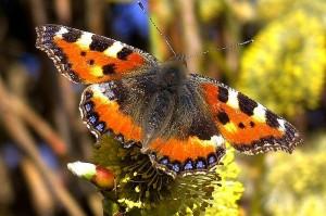 Пеперудена градина